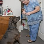 Aiding the elderly, one doggy smooch at a time